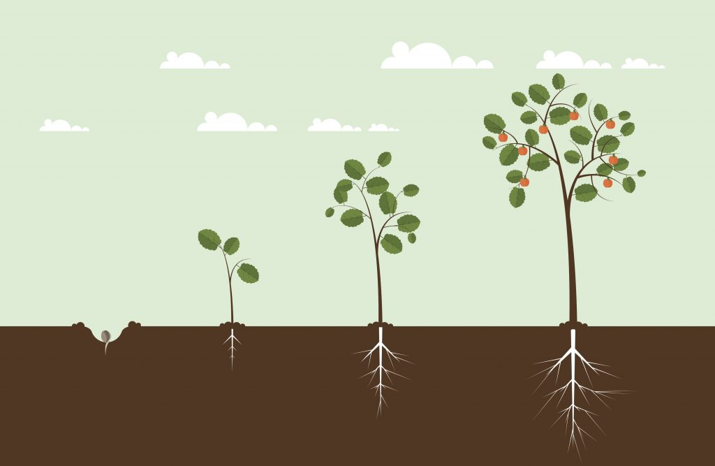keep your trees and shrubs healthy in order for them to grow properly